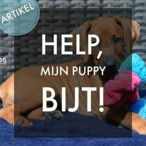 Help, mijn puppy bijt!